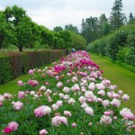 сад, цветник