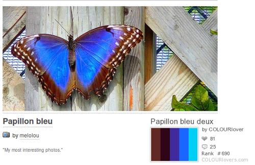 окраска бабочки в палитре