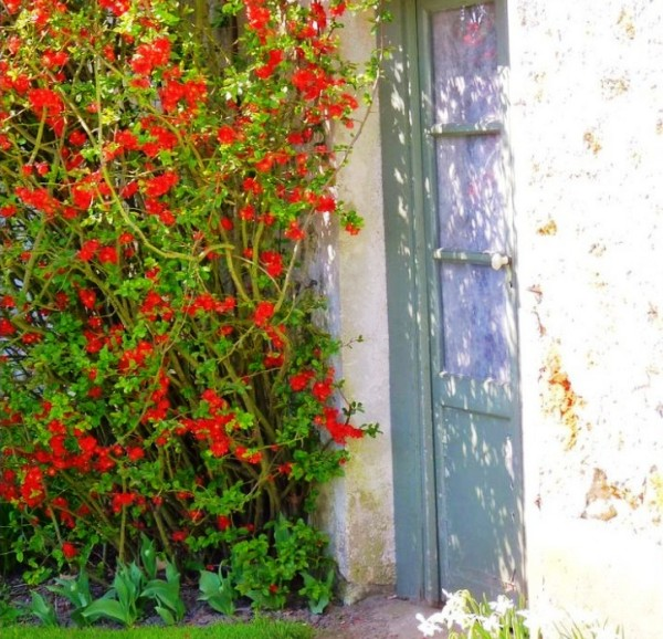 дом, сад , растения