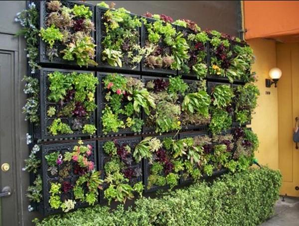 Конструкция вертикального озеленения своими руками