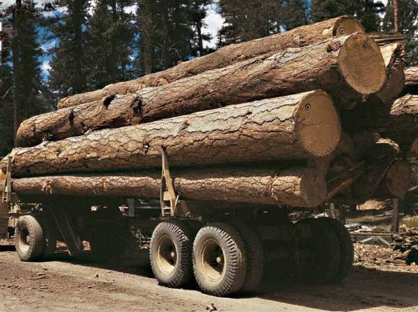 заготовка леса для строительства